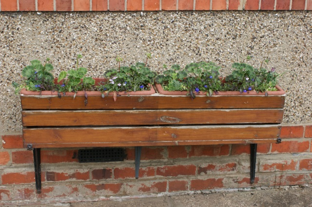 Troughs under the living room window - a few flowers are just starting to appear