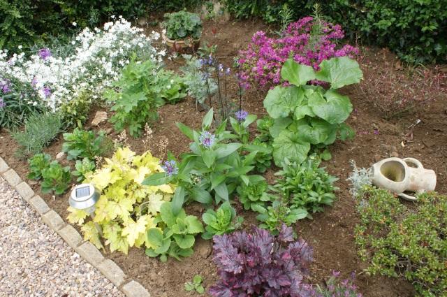 Heucheras, centaurea, azalea, dicentra, hollyhock and ox-eye daisy