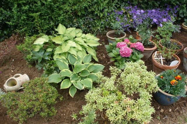 Hostas, pieris and hydrangea