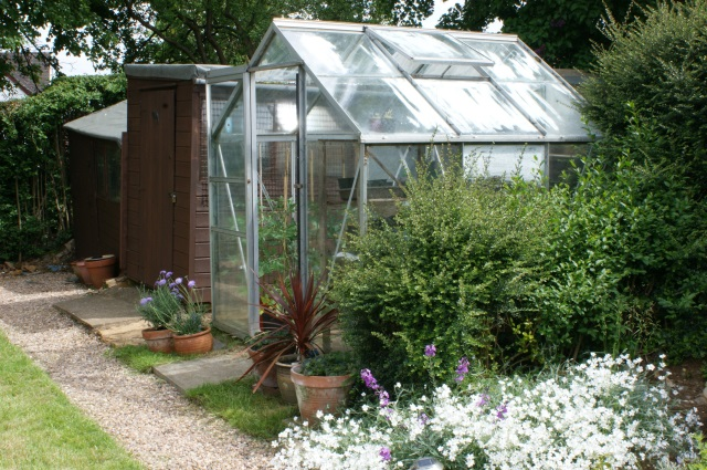 Greenhouse; the snow-in-summer is so white it almost hurts to look at it