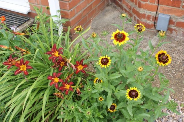 Day lilies and rudbeckia