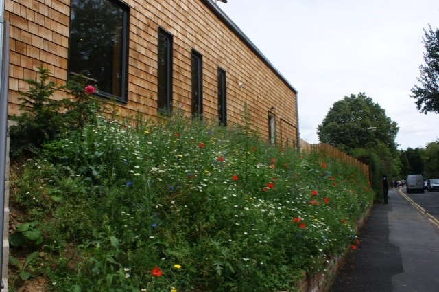 By the visitor centre - a bank of wildflowers
